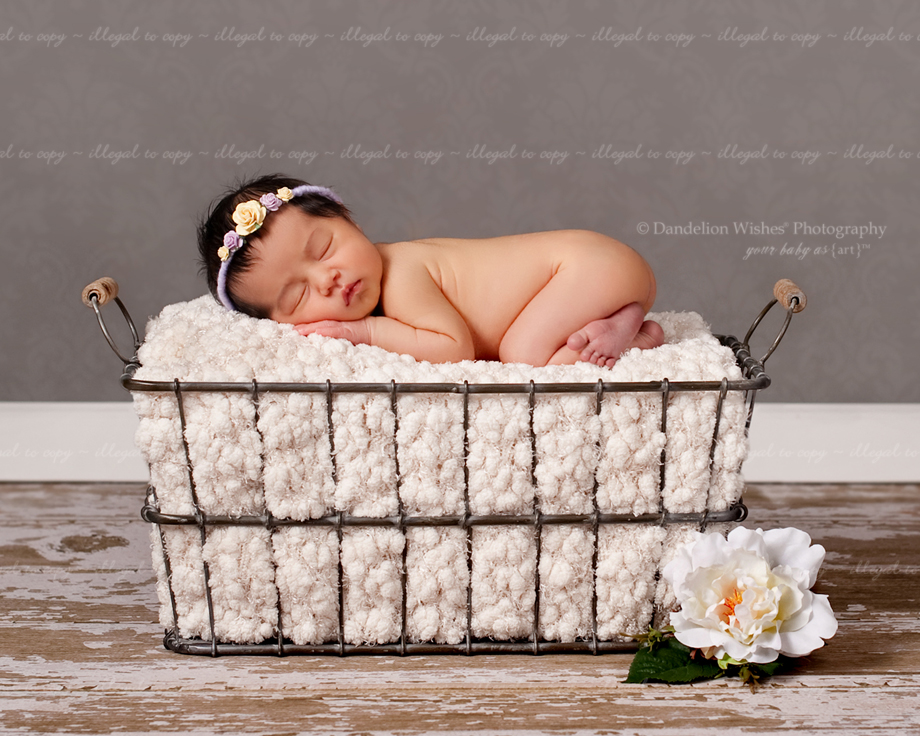 Best Fairfax County Baby Photographer Pictures