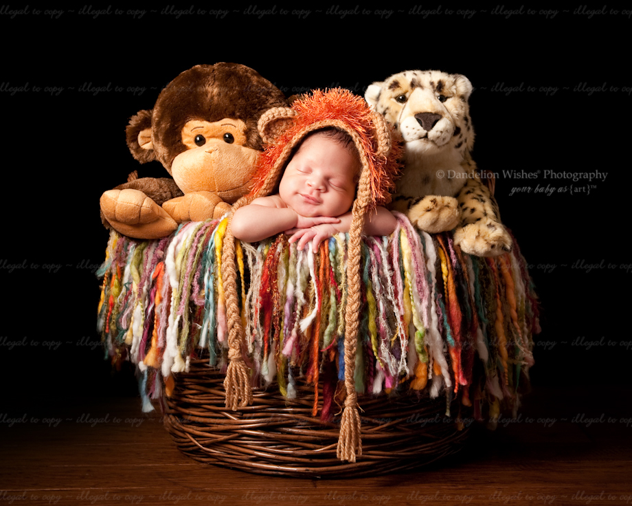 Newborn photographer near Frederick, Maryland