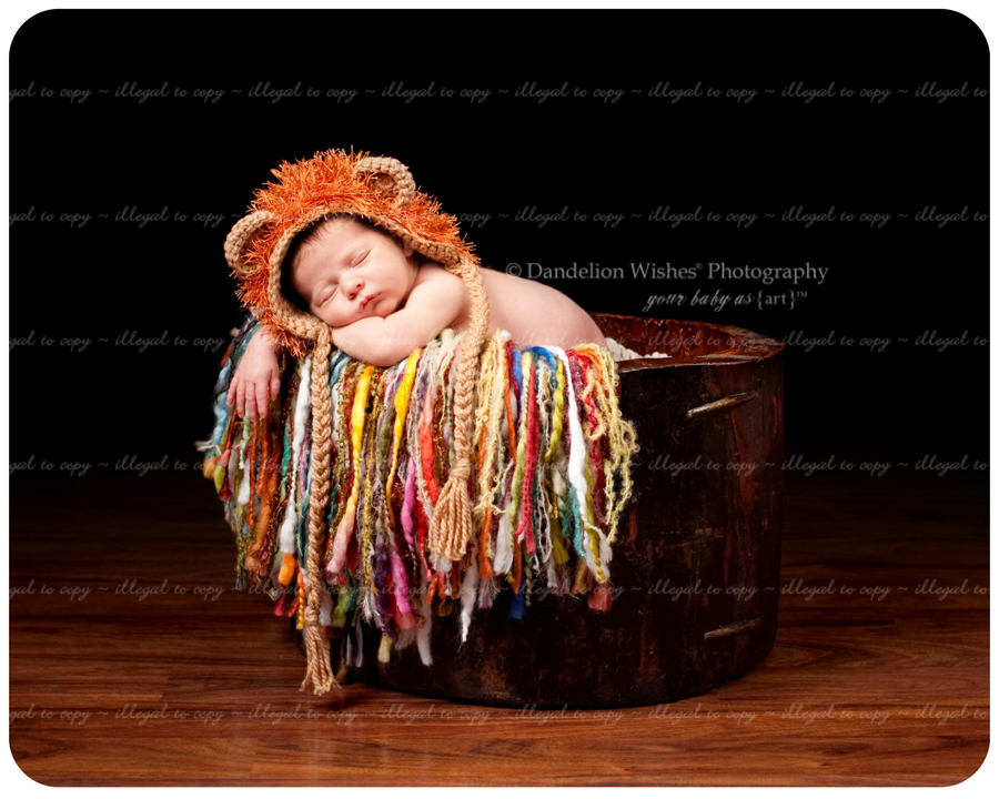 Best artistic newborn photographer near Reston VA 20194, 20190, 20191, 20193, 20195, 20196, 22096