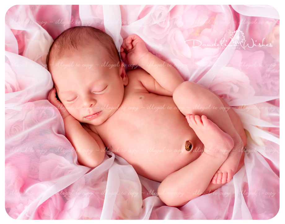 Best Newborn Baby Picture Studios ~ close to Sterling VA, Dulles VA &amp; Great Falls VA area.