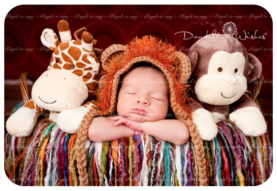 Top Newborn Photographer to Leesburg Virginia 20175 ~ close to Loudoun County VA