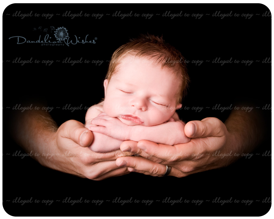 Artistic newborn photography in the Northern Virginia, Washington DC area.