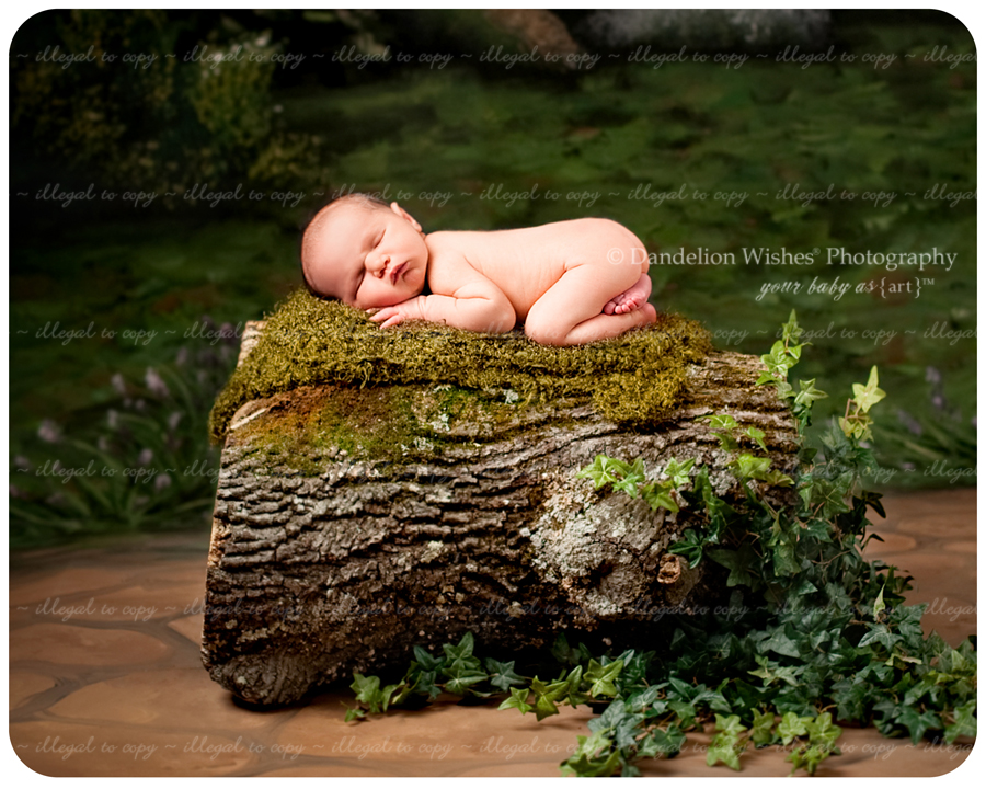 The best unique artistic newborn photography near Quantico, VA 22134, Prince William County.